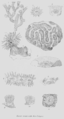 Geology and Mineralogy considered with reference to Natural Theology, plate 54.png