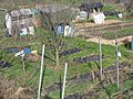 Gledhow Valley Allotments 18 March 2019 10.jpg