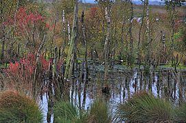 Goldenstedter Moor 2.jpg