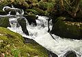 Golitha Falls 1.jpg