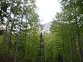 Golovrhe - panoramio.jpg