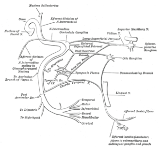 Salivatory nuclei - Plan of the facial and intermediate nerves and their communication with other nerves. (Nucleus salivatorius visible at upper left.)