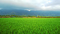 Green Is Nagercoil.jpg