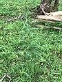 Green flower 003.jpg