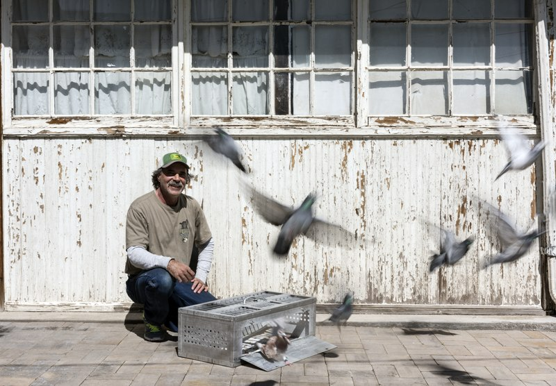 File:Greg Mekita releases a few racing pigeons near their coop in Pueblo, Colorado. Mekita breeds the birds, and his brother-in-law, Ray Vertovec, races them as part of a hobby shared by others in a Pueblo LCCN2015632693.tif