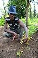 Growing healthy crop.jpg