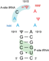 H69 E. coli.png