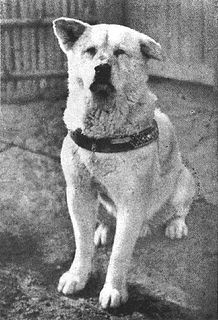 Hachikō Akita dog famous for his loyalty