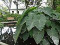 Hacienda Chorlavi pic. aa9406.jpg