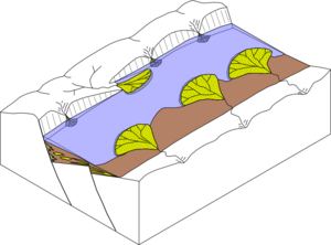 Sedimentary basin - Example of a sedimentary basin in a half-graben.