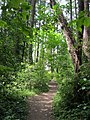 Haro Woods park trails. READ INFO IN PANORAMIO-COMMENTS - panoramio.jpg
