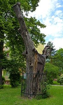 Havířov, alej v ulici Elišky Krásnohorské, 06.JPG