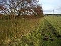 Hawthorn berries and mole hills - geograph.org.uk - 1028047.jpg