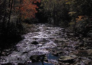 Hazel Creek (Great Smoky Mountains) river in the United States of America