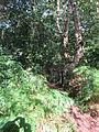 Helsby Hill (53).JPG