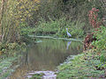 Heron and flooded footpath, Dinton Pastures - geograph.org.uk - 287743.jpg