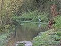 Heron and flooded footpath, Dinton Pastures - geograph.org.uk - 287743.jpg