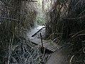 Hidden River 07.jpg