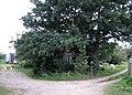 Hidden behind trees - geograph.org.uk - 984156.jpg