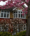 Hillcrombe Rd, SUTTON, Surrey,Greater London (3).jpg