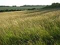 Hillside, Whatcombe - geograph.org.uk - 876163.jpg