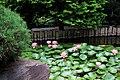 Hillwood Gardens in July (19613963898).jpg