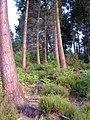 Hitchcombe Wood - geograph.org.uk - 183384.jpg