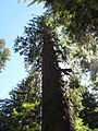 Hoh Rainforest - Olympic National Park - Washington State (9780126084).jpg
