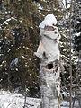 Hole in Tree - Thunder Bay.jpg
