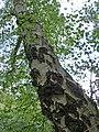 Holme Fen, Cambridgeshire (48092341892).jpg