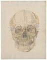 Homo sapiens - schedel - 1700-1880 - Print - Iconographia Zoologica - Special Collections University of Amsterdam - UBA01 IZ19600019.tif