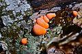 Hongos en el bosque de Artikutza.jpg