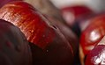 Horse-chestnut conkers (37540640482).jpg