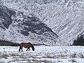 Horse at Moulzie, Upper Glen Clova - geograph.org.uk - 1058534.jpg