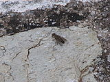 Horsefly-greece-alonisos-0b.jpg