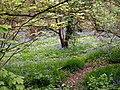 Hugset Woods Footpath - geograph.org.uk - 410297.jpg
