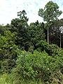 Hutan Alam Mandi Angin Minas Riau 06.jpg