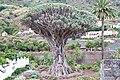 Icod de los Vinos, Santa Cruz de Tenerife, Spain - panoramio (8).jpg
