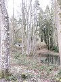 In the woods, Croft Castle - Feb 2012 - panoramio.jpg