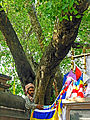 India-5141 - THE Enlightenment Tree - Flickr - archer10 (Dennis).jpg