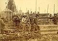 Indian hop pickers at an unidentified farm, Puget Sound region, Washington, ca 1889 (BOYD+BRAAS 53).jpg