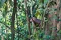 Indonesia - Bukit Lawang (26552944455).jpg