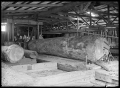 Interior view of the Piha Sawmill where a kauri log is being broken down ATLIB 293483.png