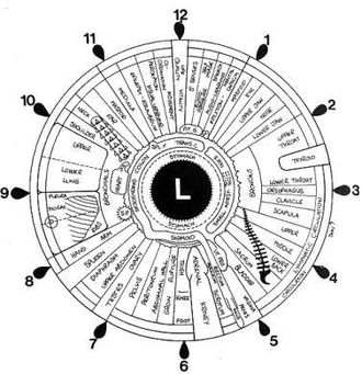 Iridology - This is an example of an iridology chart, correlating areas of the left iris, as seen in the mirror, with portions of the left hand side of the body. Changes in color or appearance of the iris are said to indicate changes in the health of the corresponding section of the body.