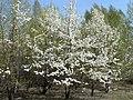 Irkutsk. Akademgorodok. Spring - panoramio.jpg
