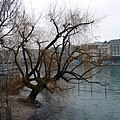 Island Rousseau, Geneve. Сен-Жерве Ле Берг, Женева, Швейцария - panoramio.jpg