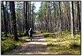 Jūrmala, Latvia - panoramio (13).jpg