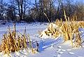 Jabłonna - staw Niwka zimą - panoramio.jpg