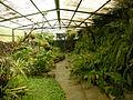Jardín canario 48.JPG