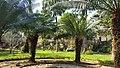 Jardim FCRB.jpg